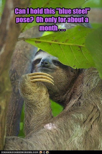 Sloths make great models for the inexperienced.