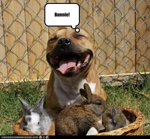 Bunnie!