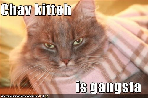 Chav kitteh  is gangsta