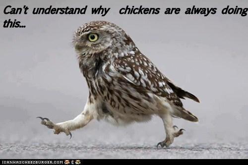 chicken,flying,walking
