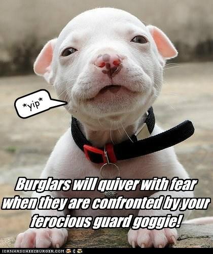 Ferocious Guard Goggie