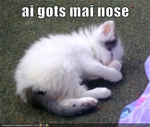 nose,kitty