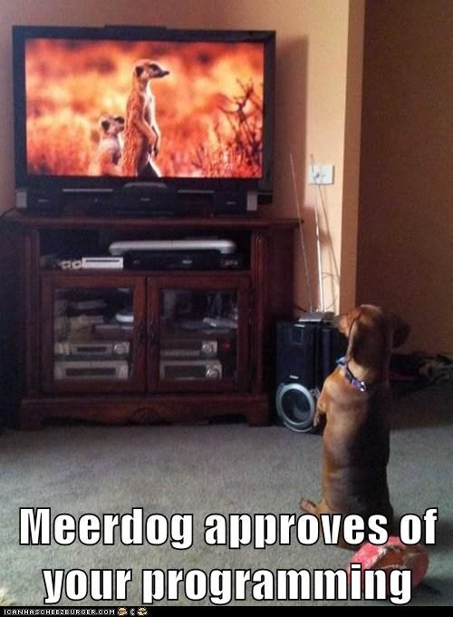 Meerdog approves of your programming