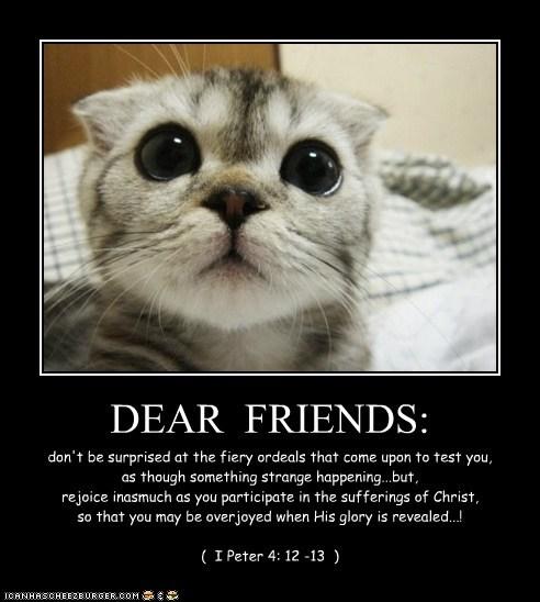 DEAR  FRIENDS: