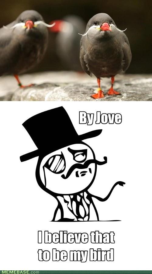 Like A Tern