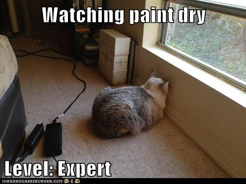 paint,bored,Cats