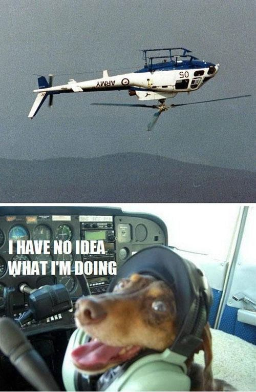 dogs,helicopters,i have no idea what im doing