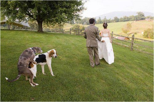 dogs,circle of life,wedding