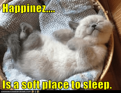 Happinez....  Is a soft place to sleep.
