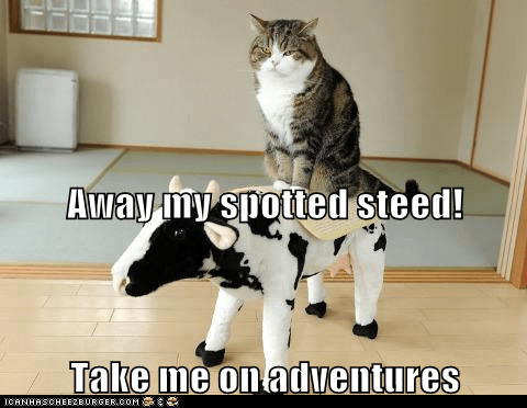 Away my spotted steed! Take me on adventures