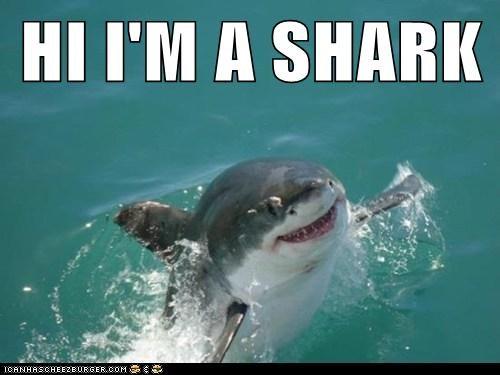 HI I'M A SHARK