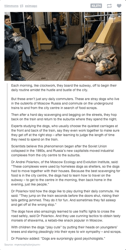 Some Seriously Smart Stray Dogs in Russia