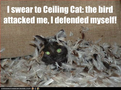 I swear to Ceiling Cat: the bird attacked me, I defended myself!