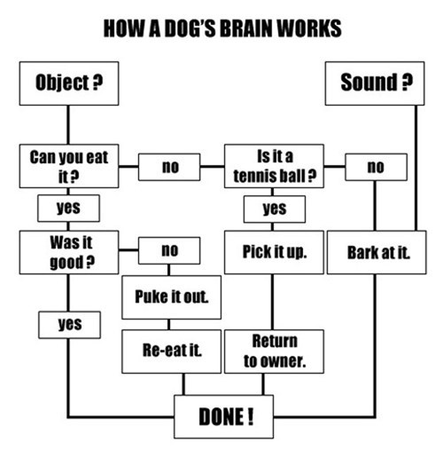 Dogs Are Simple Minded