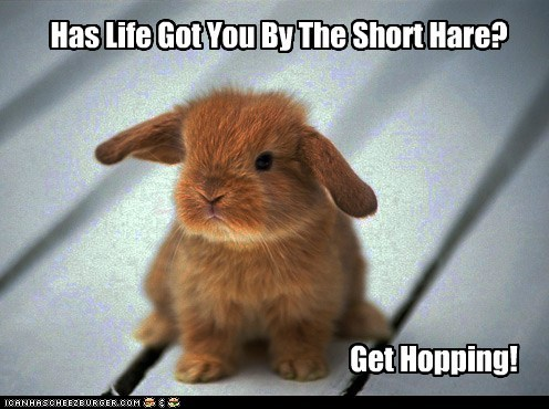 Bunny Advice