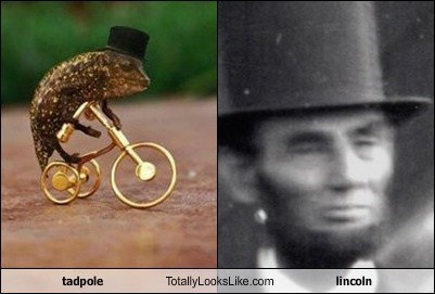 tadpole Totally Looks Like lincoln
