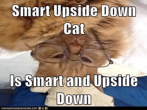 Smart Upside Down Cat  Is Smart and Upside Down
