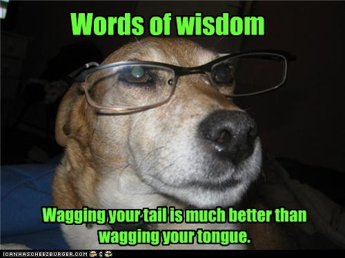 Wise Dog Is Wise