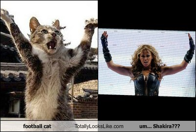 football cat Totally Looks Like um... Shakira???