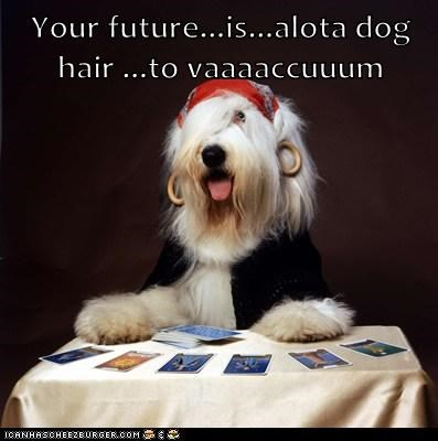 Your future...is...alota dog hair ...to vaaaaccuuum