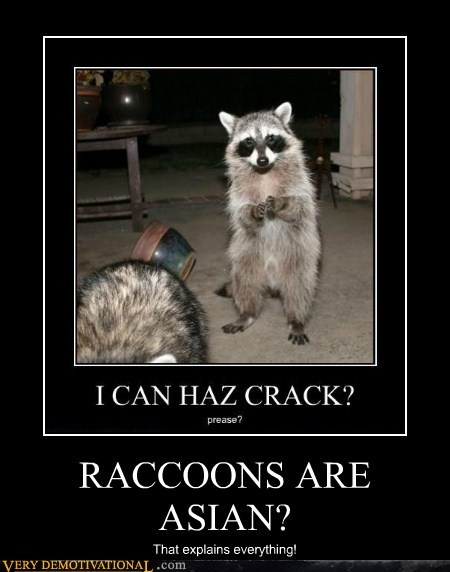 RACCOONS ARE ASIAN?
