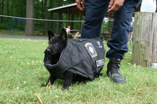 It's His First Day of Training. The Bullet-Proof Vest Doesn't Quite Fit...