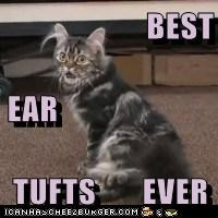 BEST EAR TUFTS       EVER