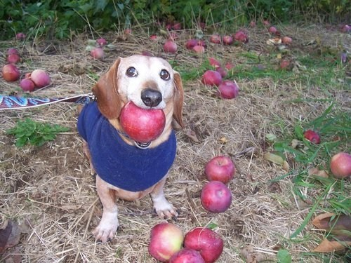 I Got a Whole Apple!