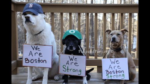 dogs,boston,restoring faith in humanity week
