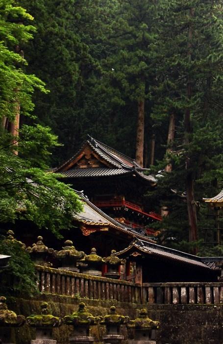 woods,Forest,Japan,landscape