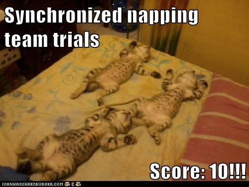 Synchronized napping team trials  Score: 10!!!
