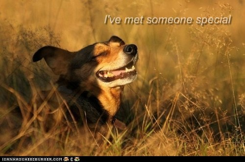 dog gone,special someone