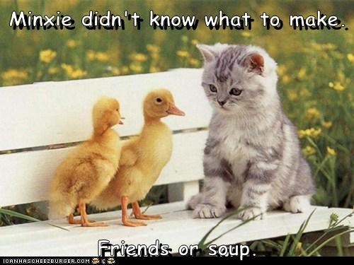 Minxie didn't know what to make.  Friends or soup.