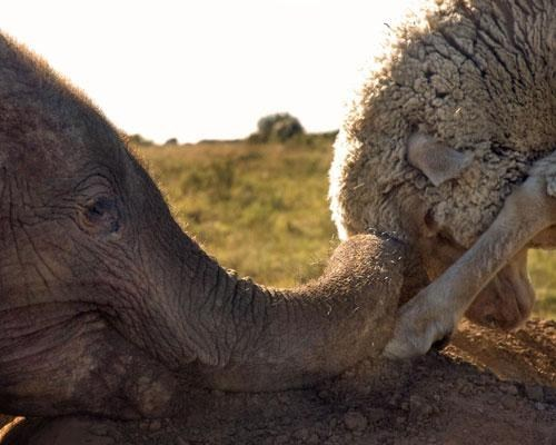 unlikely friendships,Video,animals