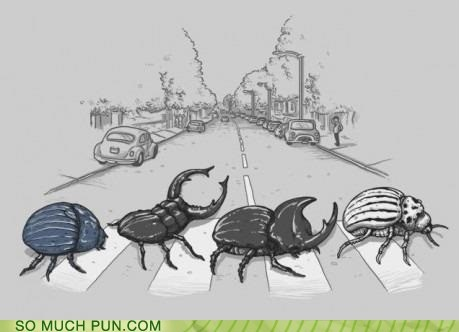 Behold the Beetles