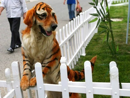 This Dog Should Maybe Play Hobbes