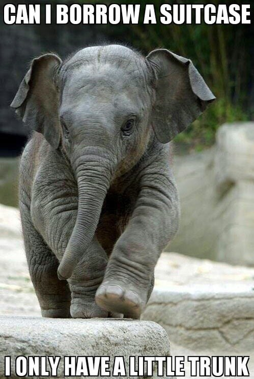 elephant,suitcase,traveling