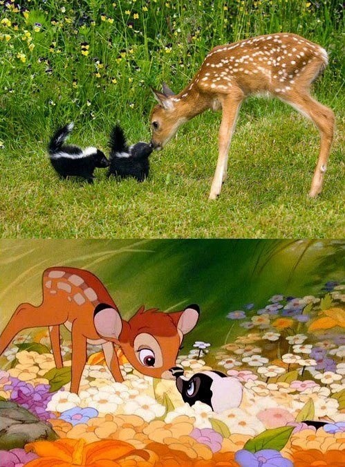 Bambi and Flower IRL