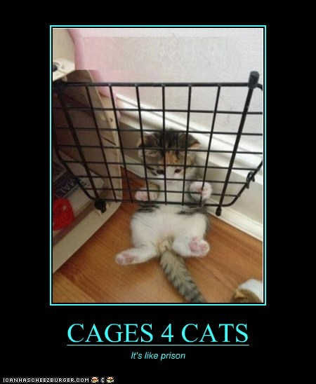 CAGES 4 CATS