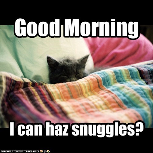 I can haz snuggles?