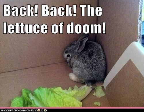 Back! Back! The lettuce of doom!