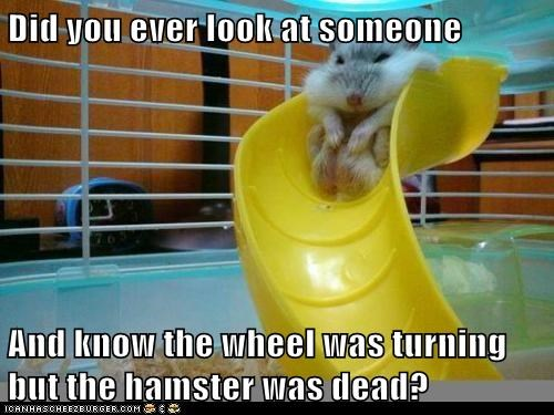 Did you ever look at someone  And know the wheel was turning but the hamster was dead?
