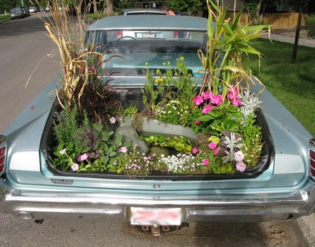 Garden in The Trunk