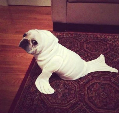 Pardon Me, Seal... Have You Seen Dog?