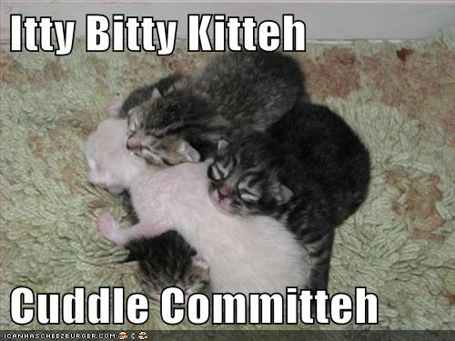 Itty Bitty Kitteh  Cuddle Committeh