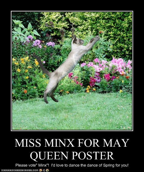 MISS MINX FOR MAY QUEEN POSTER