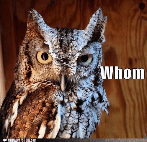 owl hoo who whom