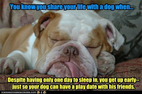 Life with Dogs XXX