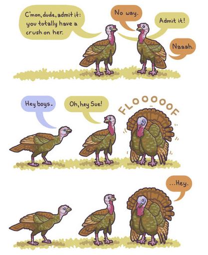 The Mating Habits of Turkeys