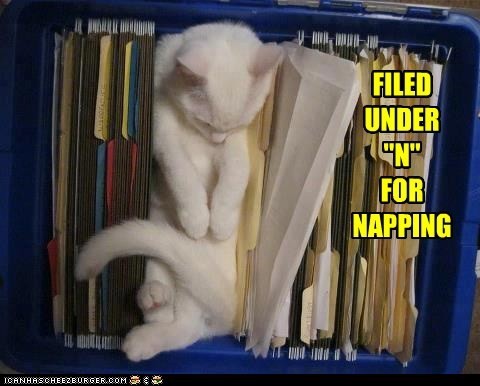"FILED UNDER ""N""  FOR NAPPING"